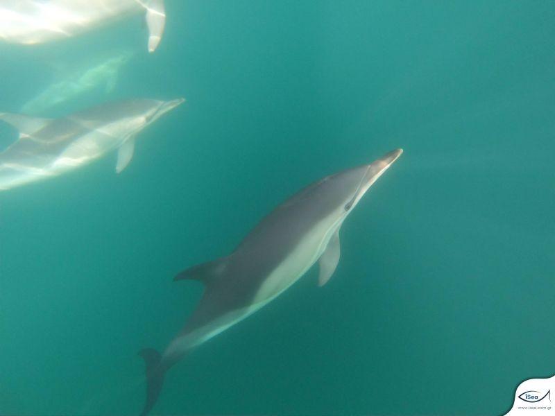 delfinia-thermaikos1.jpg