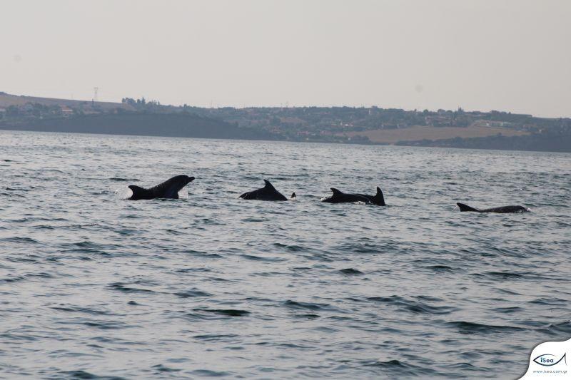 rinodelfina-delfinia-thermaikos.jpg