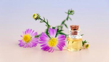 Τα top συστατικά καλλυντικών – Έλαιο Χοχόμπα (jojoba oil)