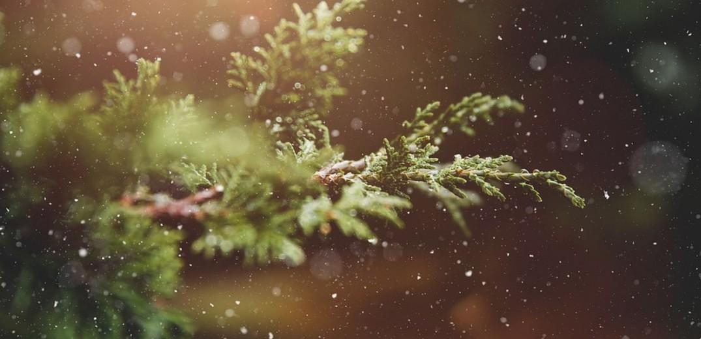 Σε ποια σημεία μπορούν οι Θεσσαλονικείς να αφήνουν φυσικά χριστουγεννιάτικα δέντρα
