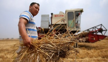 Κίνα: Νέο νανοστοιχείο στην καλλιέργεια του σιταριού