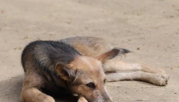 Σκότωσαν αδέσποτα σκυλιά στα Πεύκα