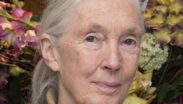Στη γλώσσα των χιμπατζήδων συστήθηκε στο κοινό της Θεσσαλονίκης η Δρ. Τζέιν Γκούντολ!