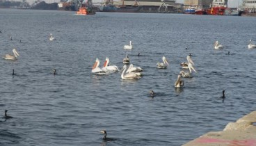 Θεσσαλονίκη: Σπάνια πουλιά βρήκαν καταφύγιο στο λιμάνι
