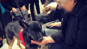 Θεσσαλονίκη: Σκύλοι - βοηθοί αλλάζουν τη ζωή ατόμων με άνοια ή Alzheimer