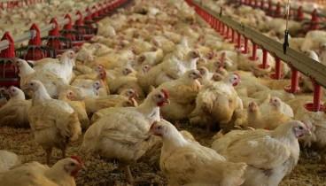 Σε επιφυλακή για τη γρίπη των πτηνών μετά τα 28 κρούσματα που εντοπίστηκαν στη Βουλγαρία