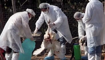 Η ΠΚΜ καλεί τους πολίτες να ενημερώνουν τις κτηνιατρικές αρχές σε περίπτωση εντοπισμού νεκρών πτηνών