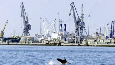 Ένα δελφίνι στην Παραλία της Θεσσαλονίκης (video)