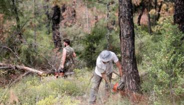 Νέα παρέμβαση του δήμου Πυλαίας -Χορτιάτη για το έντομο που αποδεκατίζει δέντρα στο Σέιχ Σου