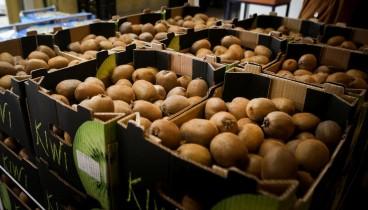 Πάνε για ρεκόρ οι εξαγωγές των ελληνικών φρούτων