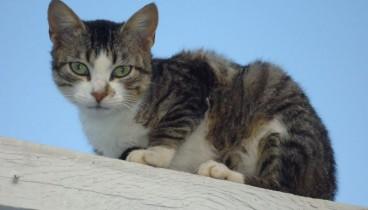 Πέθανε στη Βρετανία από λύσσα αφού τον είχε δαγκώσει γάτα στο Μαρόκο...